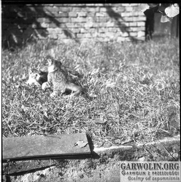 negatyw_rolki_4_009-garwolin.org_-1